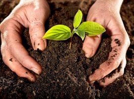 طرح توجیهی تولید کود زراعی از ضایعات خرما