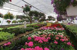 طرح توجیهی پرورش گل و گیاه در گلخانه